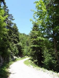 Route forestière du Jura